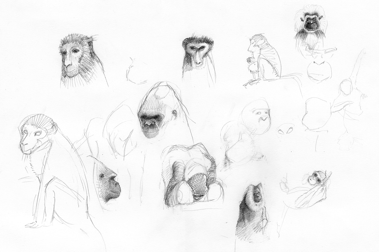 A day of drawing monkeys in the zoo