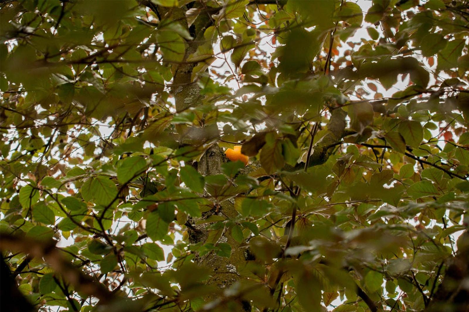 Nostalgia - An orange in a non-orange tree